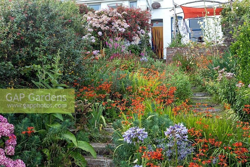 Colourful cottage-style garden with informal planting of Crocosmia, Alcea - Hollyhock and Agapanthus