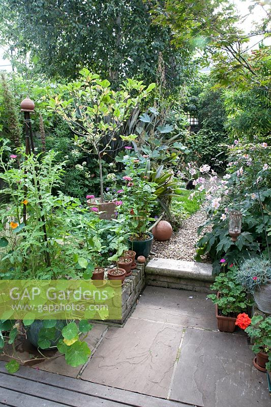 Small garden with patio with container plantings, in foreground Tomato 'Gardener's Delight' with Tropaeolum 'Mixed Gleam' - Nasturtium - in a pot