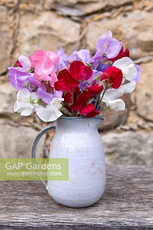 Cut Lathyrus - Sweetpeas in ceramic jug
