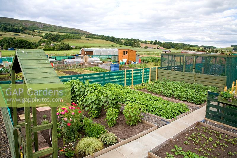 George McConnell's allotment and view to Lomond Hills.