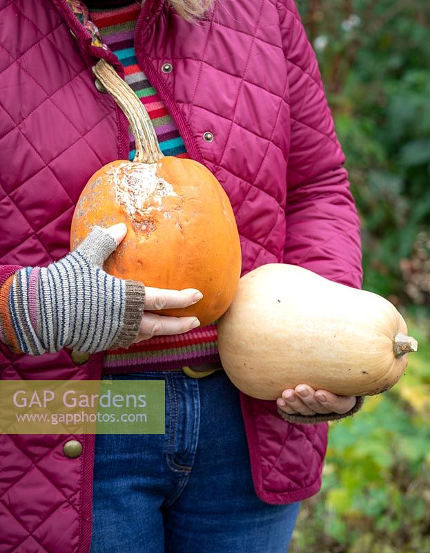 Checking for rot before storing vegetable over winter. Holding a pumpkin that has started to rot and a butternut squash that still looks fine.