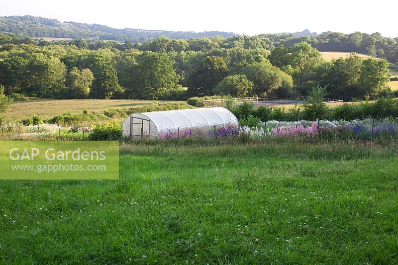 The cutting garden and polytunnel set in meadows with a view of Sussex.