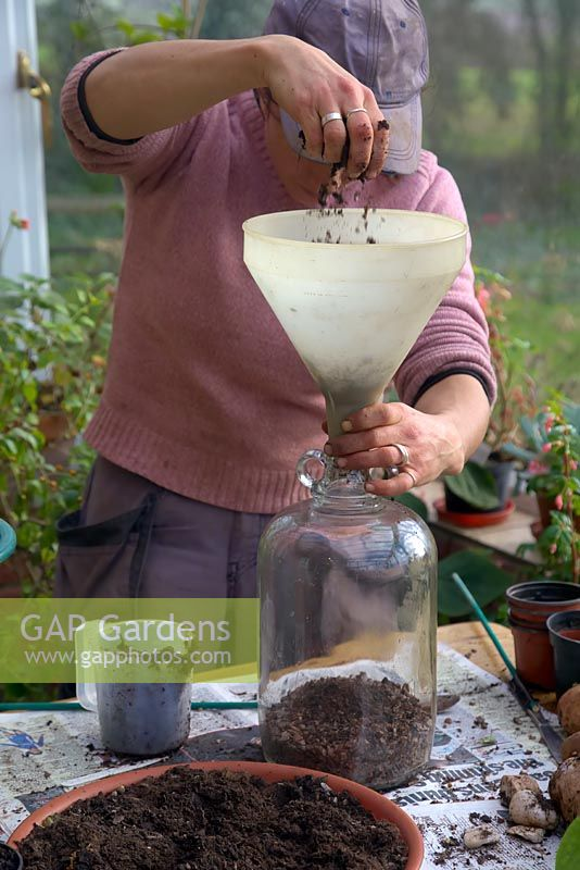 Woman planting up a glass demijon with restricted neck.