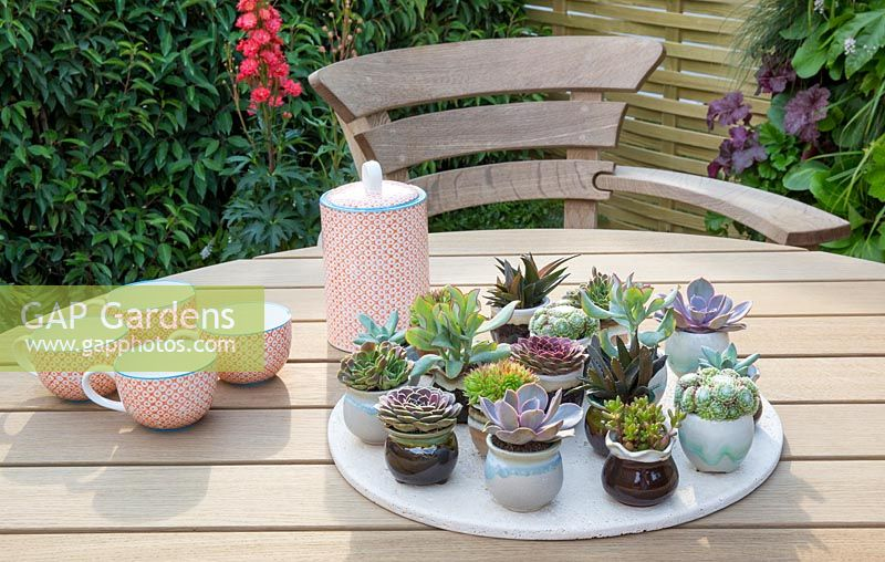 Outdoor dining area with hardwood garden furniture chairs and table with a display of succulent plants in miniature ceramic pots and cups - For The Love Of It garden. Tatton Flower Show 2017. Designer: Pip Probert