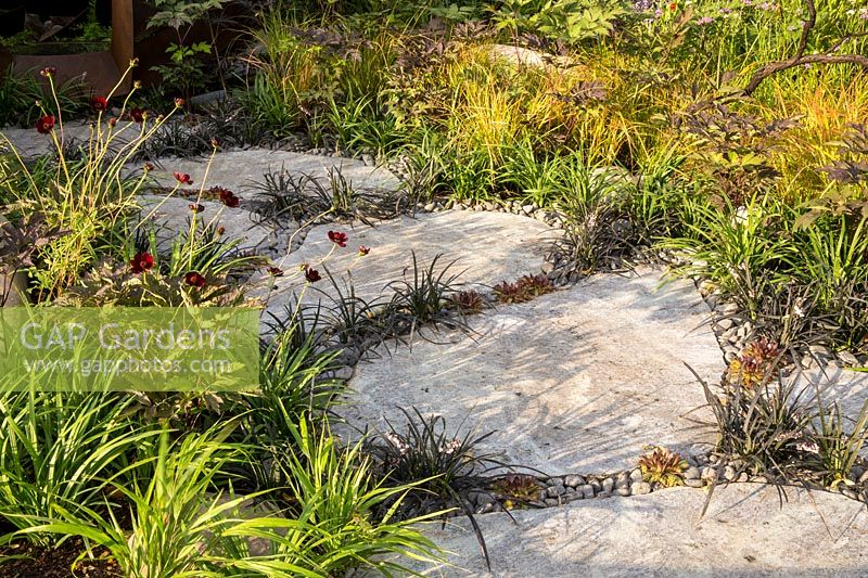 Large Caledonian stone paving slabs path interplanted with Ophiopogon planscapus 'Nigrescens' and Sempervivum. Either side Cosmos atrosanguineus, Dahlia and ornamental grasses. Elements Mystique Garden