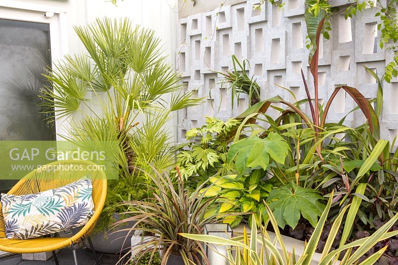 Raised bed border with green foliage perennial green foliage plants against a concrete block wall - yellow chair with cushion on patio - Defiance balcony garden. Green Living Spaces. RHS Malvern Spring Festival May 2019 - Designer: Sarah Edwards