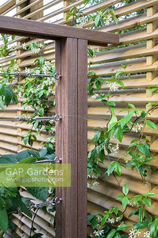 Stainless steel tension wire and rail system, with Trachelospermum jasminoides - Star Jasmine by Earth Designs.