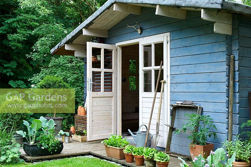 Blue garden shed with container grown salad crops and kohlrabi out the front.