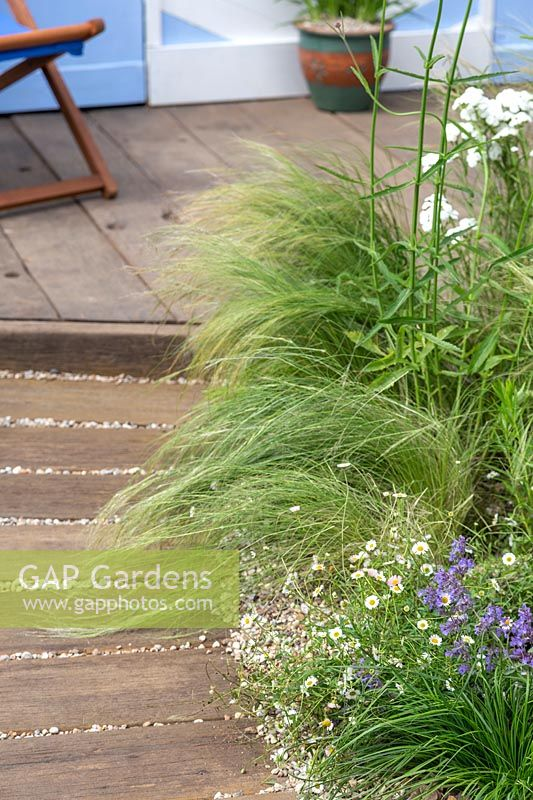 Seaside gravel garden with Stipa and Erigeron. By The Sea, RHS Hampton Court Palace Flower Show, 2017. Design: James Callicott, Sponsors: Southend.
