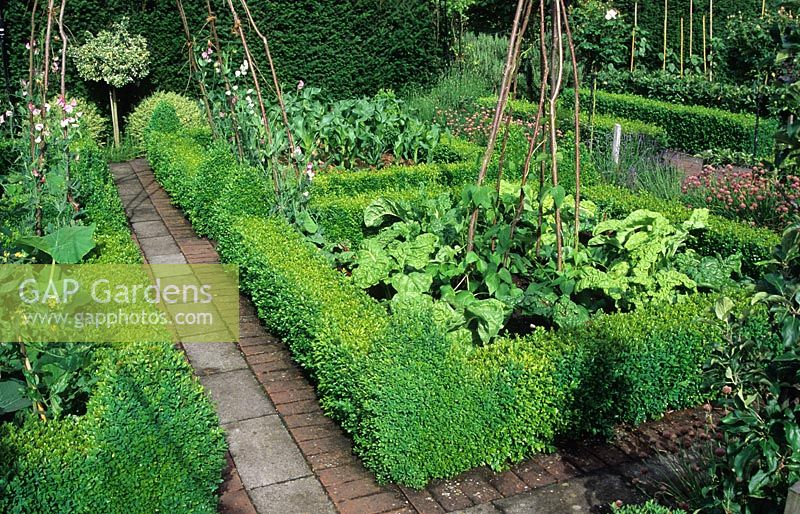 Formal vegetable garden with evergreen formal clipped borders.