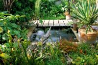 Formal pond by decking with carnivours plants at Waterford Lane