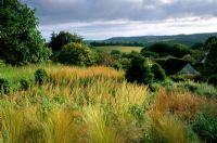 Mixed autumn border at Veddw House in Gwent, Wales. Stipa tenuissima, Anamanthele lessoniana, Carex buchananii
