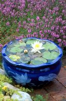 Glazed blue container pond on pation with Thymus and Nymphaea