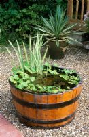 Large wooden barrel re-used as container pond - Farm Fields, Sanderstead