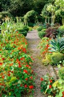 Gravel path with Nasturtiums in Kitchen garden at Veddw House in Gwent
