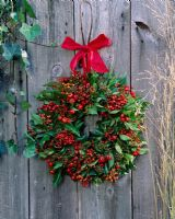 Wreath of Hedera - Ivy, rose hips and Photinia berries on rustic wooden door