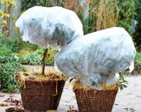 Rhododendron bushes in pots wrapped for winter in fleece and wicker baskets with straw