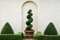 Box topiary against white wall at Kettle Hill