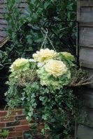 Winter hanging basket with ornamental Kale 'Northern Lights', Hedera - Ivy and Calluna vulgaris - Heather