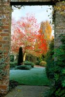 View through opening in wall to Liquidambar 'Worplesdon', Taxus topiary and Fagus 'Dawyck'in autumn at Coates Manor in Sussex.