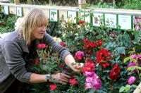 Woman selecting Roses at Garden Centre