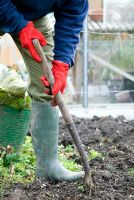 Digging and Clearing weeds from vegetable garden in winter at Gowan Cottage.