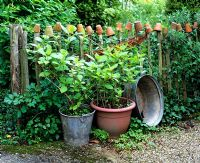 Rustic wooden picket fence with pots, containers with shrubs