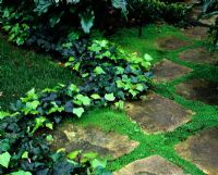 Paving with zig zag Hedera - Ivy