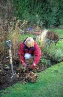 Womand tidying border in late winter, cutting dead foliage from Alchemilla mollis