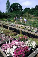People browsing and buying plants at Garden Centre