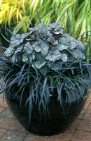 Containers with Heuchera 'Silver Scrolls' - Alunroot and Ophiopogon planicarpus nigrescens