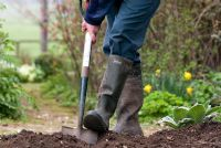 Digging over soil with a spade and adding compost in preparation for planting a new flower bed in spring.