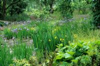 Bog Planting with Iris sibirica 'Papillon' and Iris pseudacorus at The Wave Garden in Pensthorpe, Norfolk