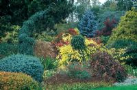 View of autumn border at Foggy Bottom, Bressingham with Picea pungens Hoopsii, Cotinus c. Royal Purple, Picea sitchensis Papoose, Picea omorika Pendula Bruns, Jasminum officinale Fiona Sunrise, Hedera helix, Miscanthus sinensis Yakushima Dwarf, Hydrangea Quercifolia.