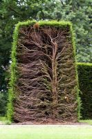 Trimmed hedge - cross section through hedge