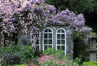 Garden room covered in Clematis montana and Wisteria sinensis. North Court, Isle of Wight