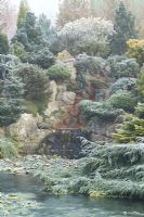 The frozen pond and rock garden with mixed conifers in John Massey's garden in winter.