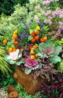 Foliage, fruit and flowers for late summer and autumn in large terracotta pot - Physalis with Brassica oleracea, Erica and Caryopteris 'Ferndown' - Aster x frikartii behind