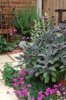 Salvia officinalis 'Purpurascens' - Purple sage and Aubretia contrast together at Dore Cottage, Berkshire NGS