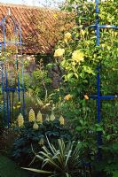 Yellow border with Lupins, Phormium and Rosa 'Graham Thomas' contrasting with blue obelisks at Hooper's Holding NGS