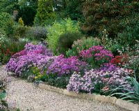 Colourful border of Asters at The Picton Garden, Worcestershire