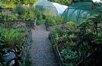 Plant sale area with triangle raised beds containing sown plants - Polytunnels in background - Jura House Walled Garden