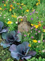 An antique terracotta Mediterranean jar makes a focal point amongst hardy annuals and red cabbage - Centaurea cyanus, Eschscholtzia californica and Calendula officianalis are included in the mix