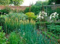 Decorative and productive potager with carrots, onions, rocket, Rosa 'Iceberg', Sisyrinchium striatum, Euphorbia oblongata, Strawberries and rusty obelisks