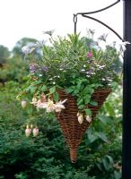 Willow hanging basket filled with summer bedding