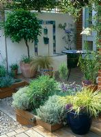 Raised decked patio with Lemon tree, Hackonechlea macra 'Alboaurea' in blue glazed pot, Santolina and Lavandula, tiled water feature and mosaic topped table