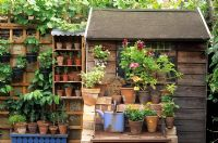 Plants in small pots around garden shed in  London garden