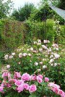 Rose garden with obelisk - foreground Rosa 'Gertrude Jekyll', centre Rosa 'Jacques Cartier' at Fiona Raymonds in Suffolk