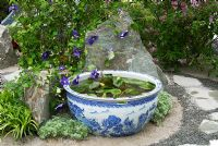 Porcelain water bowl with Nymphaea and Clematis 'Kingfisher' in the 'Through the Moongate Chinese Garden', Chelsea 2007