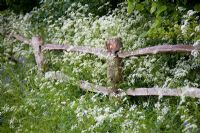 Post and rail fence with Cow Parsley - Anthriscus sylvestris at Brook Cottage Garden - Cotswolds
